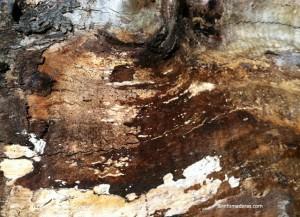 ¿Cómo saber si la madera ha sido atacada por agentes biológicos?