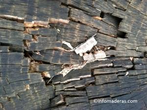 Agentes biológicos que atacan la madera: los insectos
