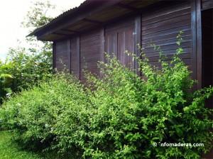 cabana-madera
