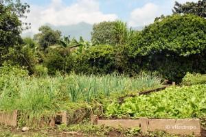 Peligros de la madera inmunizada con arsénico, CCA:  Suelos contaminados