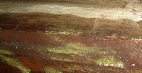 tips c mo remover los hongos de sus muebles en madera