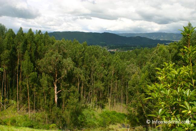 ¿Qué es la silvicultura?