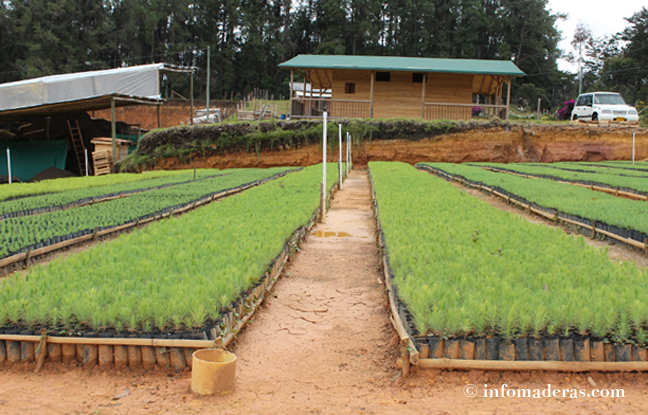 Optimaderas un vivero especializado en comercializaci n for Conclusion de un vivero