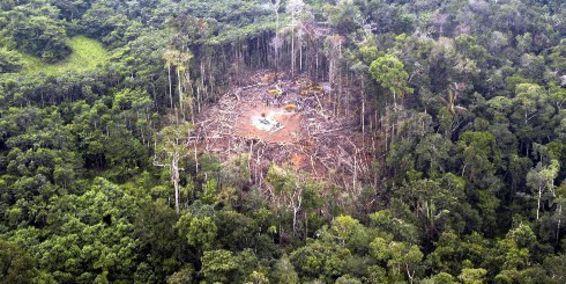 Colombia en busca de la legalidad de sus procesos madereros