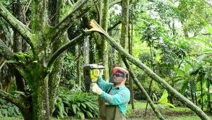 Seguridad: los riesgos que pueden tener los árboles defectuosos