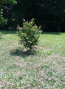 Siembra y mantenimiento de árboles